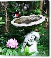 Rose Breasted Grosbeak Acrylic Print