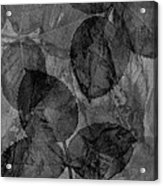 Rose Clippings Mural Wall - Black And White Acrylic Print