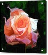 Rose Colored Acrylic Print