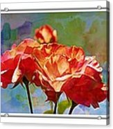 Rose Colours Acrylic Print