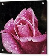 Rose Acrylic Print by Diane Reed
