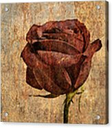 Rose En Variation - S22ct05 Acrylic Print