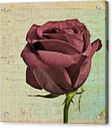 Rose En Variation - S23ct06 Acrylic Print