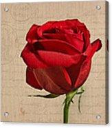 Rose En Variation - S2at03a Acrylic Print