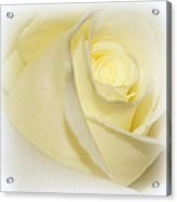 Rose Fades To White Acrylic Print