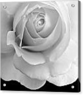 Rose Flower Macro Black And White Acrylic Print