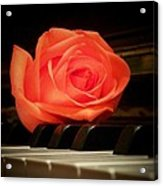 Rose From A Sweetheart Acrylic Print