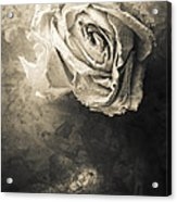 Rose From Another Day Acrylic Print