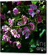 Rose Garden 2 Acrylic Print