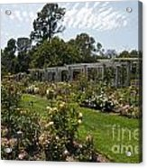 Rose Garden At The Huntington Library Acrylic Print