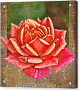 Rose Greeting Card Birthday Acrylic Print