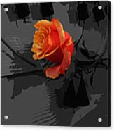 Rose IIi - A Message Acrylic Print