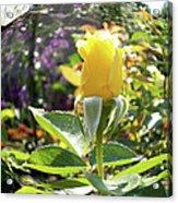 Rose In A Bubble Digital Art Acrylic Print