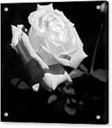 Rose - Infrared Acrylic Print