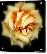 Rose Light Acrylic Print