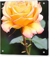 Rose Acrylic Print by Melisa Meyers