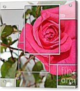 Rose Montage Acrylic Print