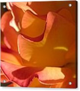 Rose Of Light Acrylic Print