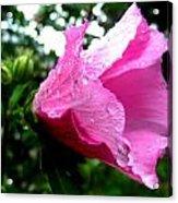 Rose Of Sharon 3 Acrylic Print by Mark Malitz