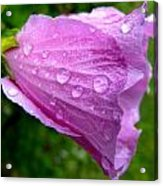 Rose Of Sharon With Rain Acrylic Print