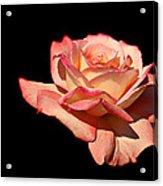 Rose On Black Background Acrylic Print