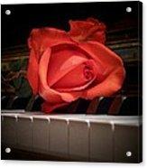 Rose On Piano Acrylic Print