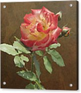 Rose On Thornridge Road Acrylic Print