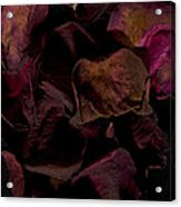 Rose Petals #4 Acrylic Print