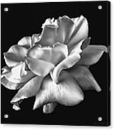 Rose Petals In Black And White Acrylic Print
