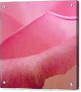 Rose Petals Acrylic Print by Nancy Edwards