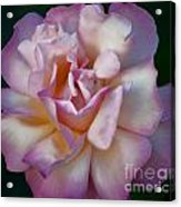 Rose Petals Straight From My Heart Acrylic Print