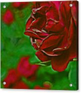 Rose Red By Jrr Acrylic Print
