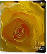 Rose -remeber Me Acrylic Print