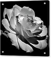 Rose Acrylic Print by Rona Black