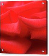 Rose (rosa 'veteran's Honour') Acrylic Print