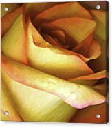 Rose Scan Softened Acrylic Print