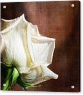 Rose - See Things Differently Acrylic Print