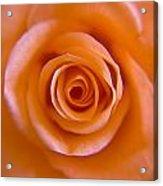 Rose Spiral Acrylic Print by Kim Lagerhem