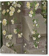 Rose Sprawling On Stone Acrylic Print