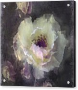 Rose Spray Acrylic Print by Jill Balsam