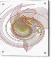 Rose Swirl Acrylic Print