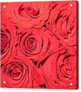 Rose Swirls Acrylic Print