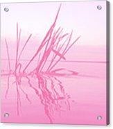 Rose Tinted Glasses Acrylic Print