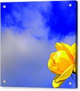 Rose To The Sky Acrylic Print