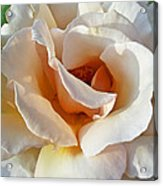 Rose Upclose Filtered Acrylic Print