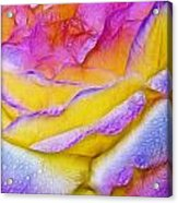 Rose With Dew Drops In Candy Colors Acrylic Print
