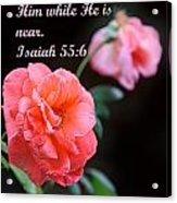 Rose With Echo Is. 55v6 Acrylic Print by Linda Phelps