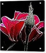 Rose With Friend Acrylic Print