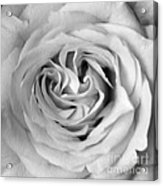 Rose With Heart B W Acrylic Print