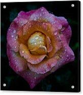 Rose With Rain Drops Acrylic Print